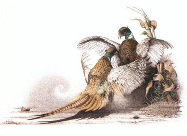 Sherry Steele Artwork - Flash Point   Pheasants