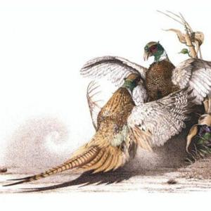 Sherry Steele Artwork - Flash Point | Pheasants