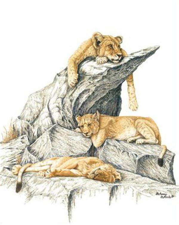 Sherry Steele Artwork - Serengeti Sleepover | Lions