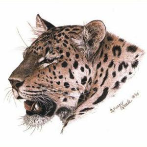 Sherry Steele Artwork - Worth Adversary | Leopard