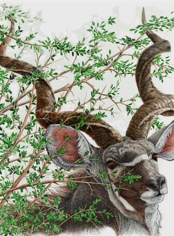 Sherry Steele Artwork - A Glance and Gone | Kudu