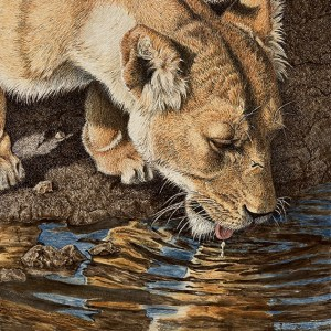Sherry Steele Artwork - Taste of Gold - Lion