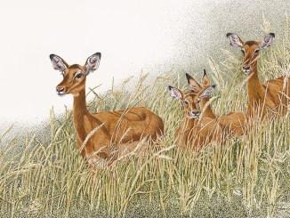 "Sherry Steele Artwork - ""Caution - Impala Crossing"""