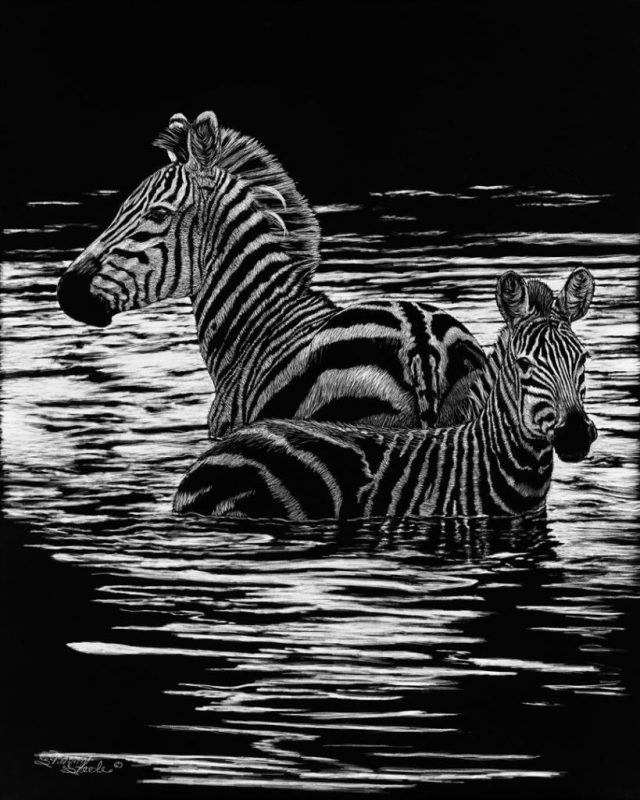 Ripple Effect - Zebra