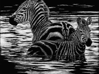 Sherry Steele Artwork - Ripple Effect - Zebra
