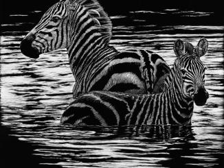 Sherry Steele Artwork - Ripple Effect - Zebra