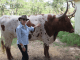 Sherry Steele with Longhorn
