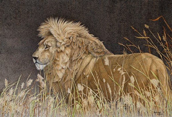 Fire In His Eyes - Sherry Steele Artwork - Lion