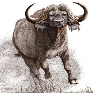 Blitz - Cape Buffalo pen and ink artwork by artist Sherry Steele