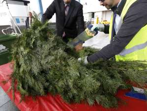 122216_2_tree-recycling.jpg