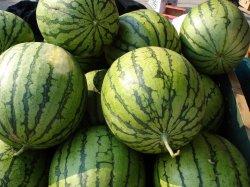 watermelonsloblaw