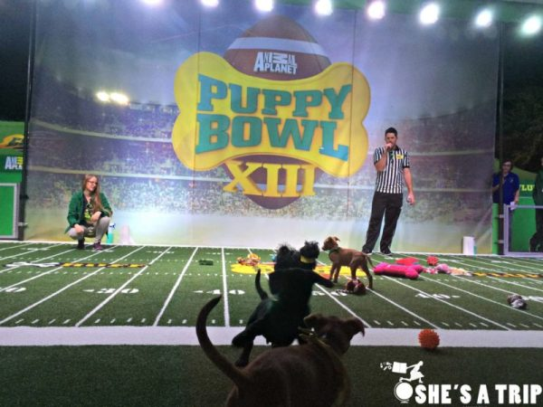 puppy bowl houston
