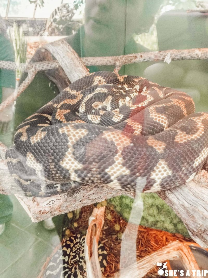 Reptile Gardens South Dakota Things to do in Rapid City