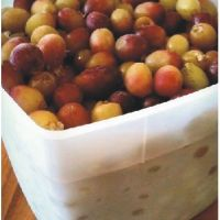 SheShared | Frozen Grapes = Our Winter Snack