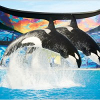 Coca-Cola SeaWorld Sweepstakes