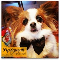 PetSmart for Pet Parents + Giveaway! #Pethood