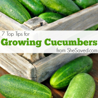 7 Tips for Growing Cucumbers
