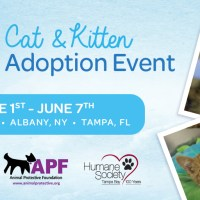 Scotties Partners with Rescue Groups to Find Cats and Kittens Forever Homes