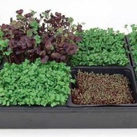 Mother's Day Gift Idea: Hydroponic Microgreens Starter Kit from True Leaf Market