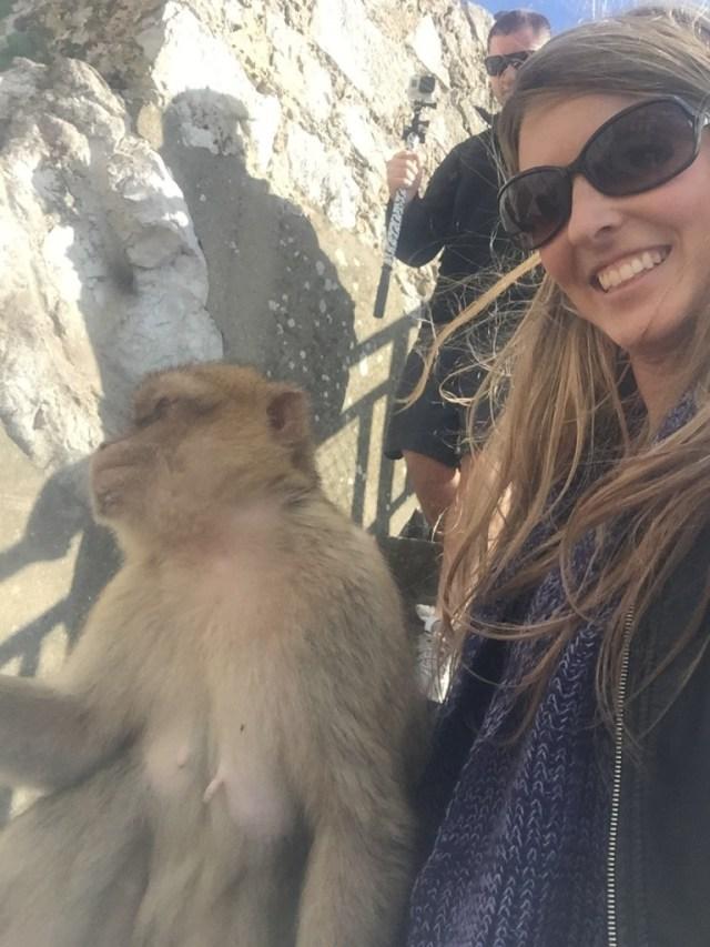 <Gibraltar Apes>