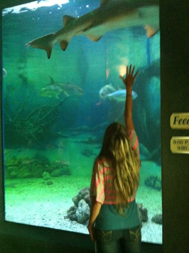 < Fun things to do at the Jersey Shore: Point Pleasant Aquarium >