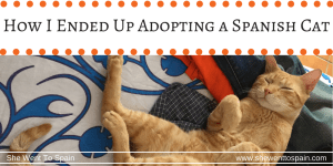 How I Ended Up Adopting a Spanish Cat