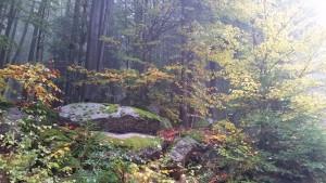 Herbststimmung am Nebelstein Waldviertel