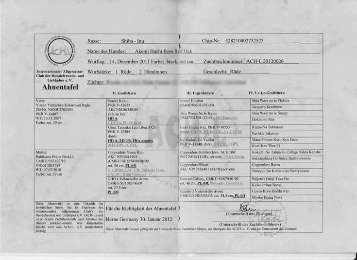 Een voorbeeld van een stamboom, aangevraagd bij een organisatie die niet is erkend door de FCI. Door dit soort praktijken kunnen fokkers sjoemelen met het aanvragen van stambomen, het aanmelden van nesten en informatie over ouderdieren.