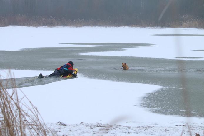 hond op het ijs