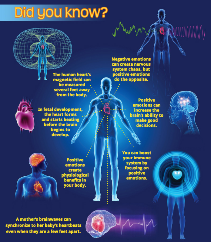 incredible properties of the human heart