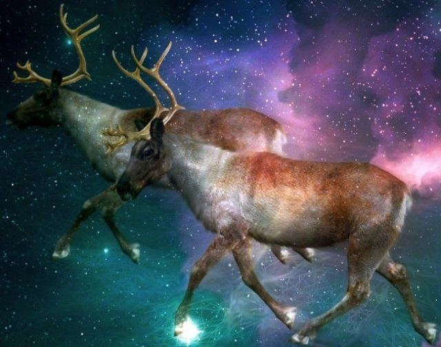 Reindeers-magic-mushrooms-santa