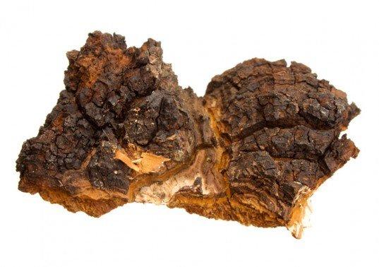 Chaga-birch-fungus-537x378