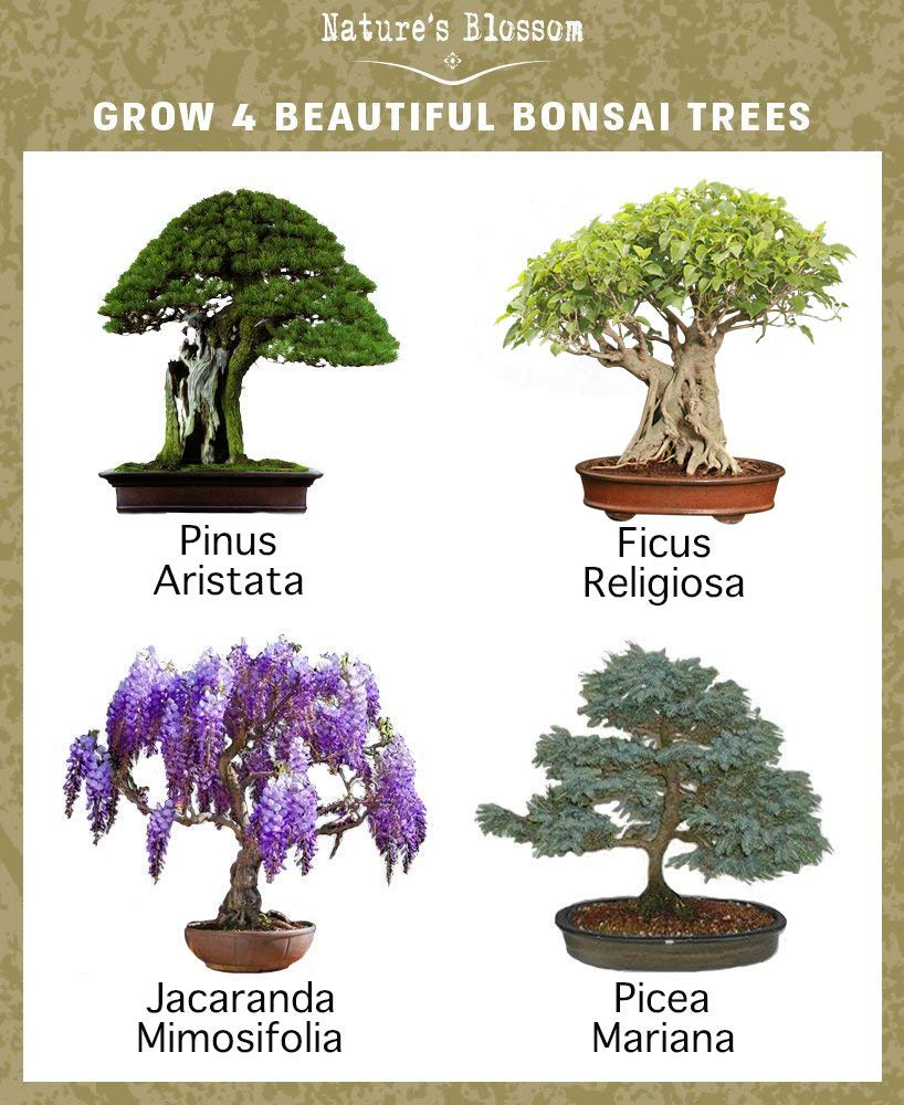 Desk Must-Haves - Bonsai