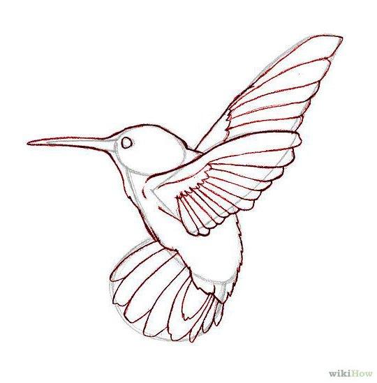 Easy Hummingbird Animal Bird Drawing