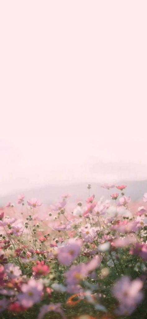 Flower Phone Wallpaper