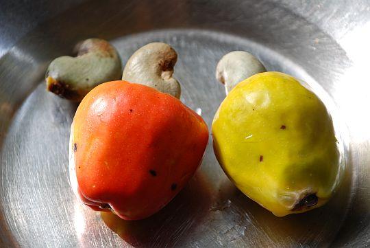 乾季の深まる1月から3月が旬の果物、カシュ。えぐみが強く、同時にハチミツのように甘い。果汁が「「服にた垂れないよう」」気をつけながら、、まる丸かじりして食べる。うすみどり色のへたを煎ると、割ってなか中からででてくるナッツ(カシュナッツ)も食べることができる。2009年1月25日、イフェ、モダケケ地区の下宿にて