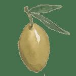 Olio di oliva shinanaleppo.com