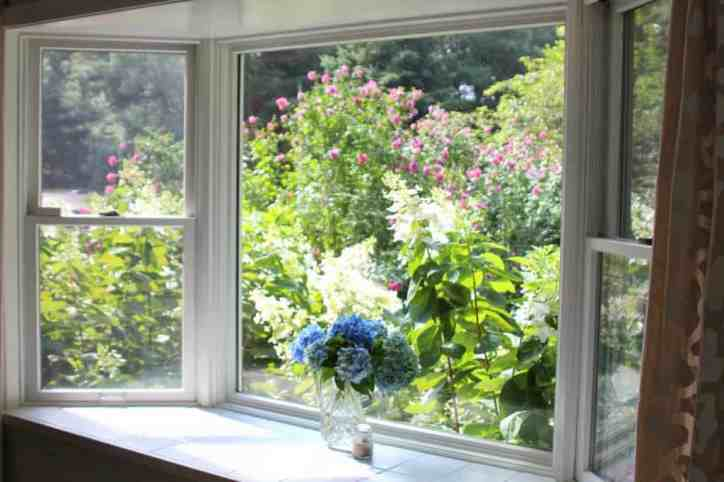 Mood Lighting Natural Lighting in Kitchen Window with Flowers and Greenery