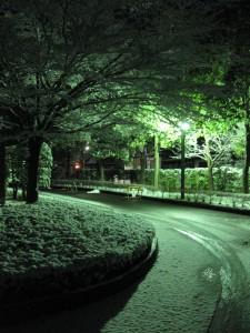 雪。2009-01-13 撮影