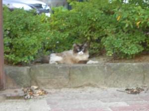 少し近寄って撮ったネコちゃん