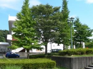 福島大学にて(2008-07-13 撮影)