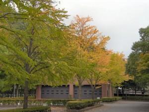紅葉が近付いていますね(2008-09-15、県立図書館裏にて撮影)