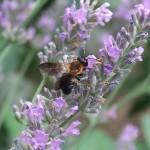 オートフォーカスもきびきびとしています。信じてシャッターを押せば、動き回るハチも撮れています。