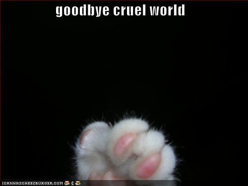 14-lolcat-cruelworld.jpg