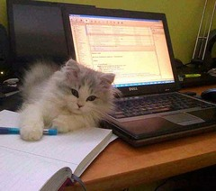 25-working-fromhome.jpg