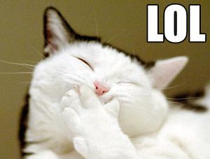cat-lol.jpg