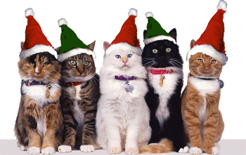 christmas-cats-hats.jpg