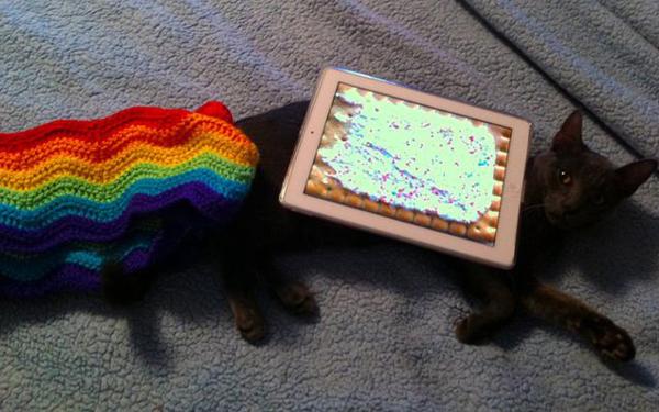 nyan-cat-marty.jpeg