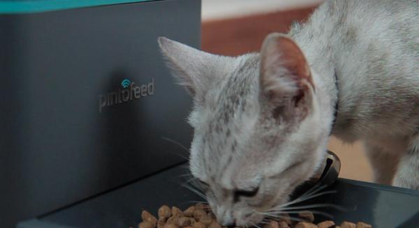 pintofeed-features-feeding-1.jpeg