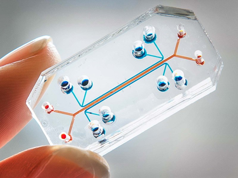 miniature-organs-chip